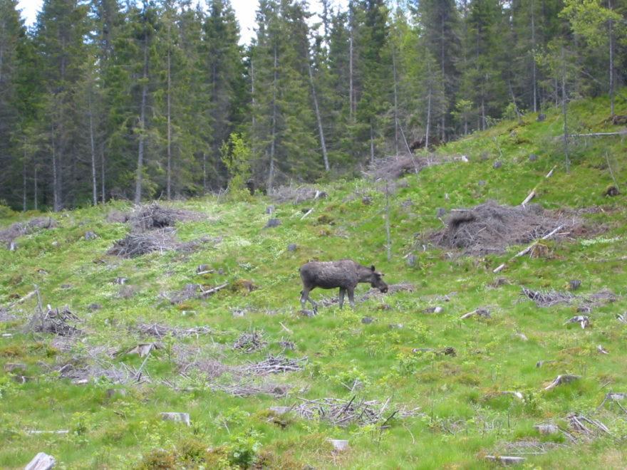 Bymarka, un increíble bosque en Noruega para disfrutar en vacaciones