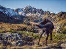 El turismo rural, una opción 'petfriendly' para los que viajan con su mascota