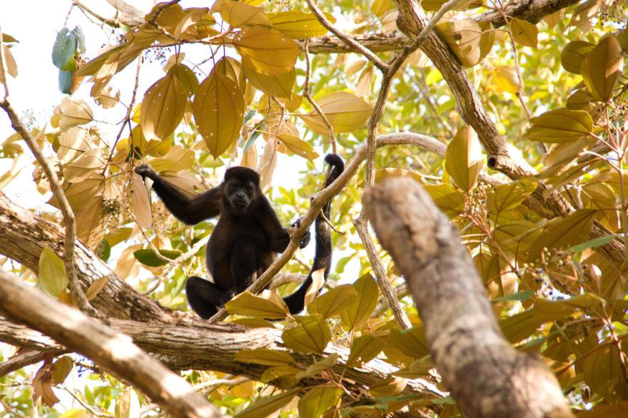 Los tres lugares destacados para disfrutar del ecoturismo en Panamá en vacaciones