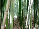 El Jardín del Bambú Juknokwon, un lugar natural para disfrutar en Dyamang, Corea del Sur