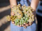 Llega la vendimia y es el momento de hacer la Ruta del Vino de Rueda
