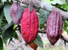 Las rutas del Cacao de Ecuador, propuestas para disfrutar con un producto único