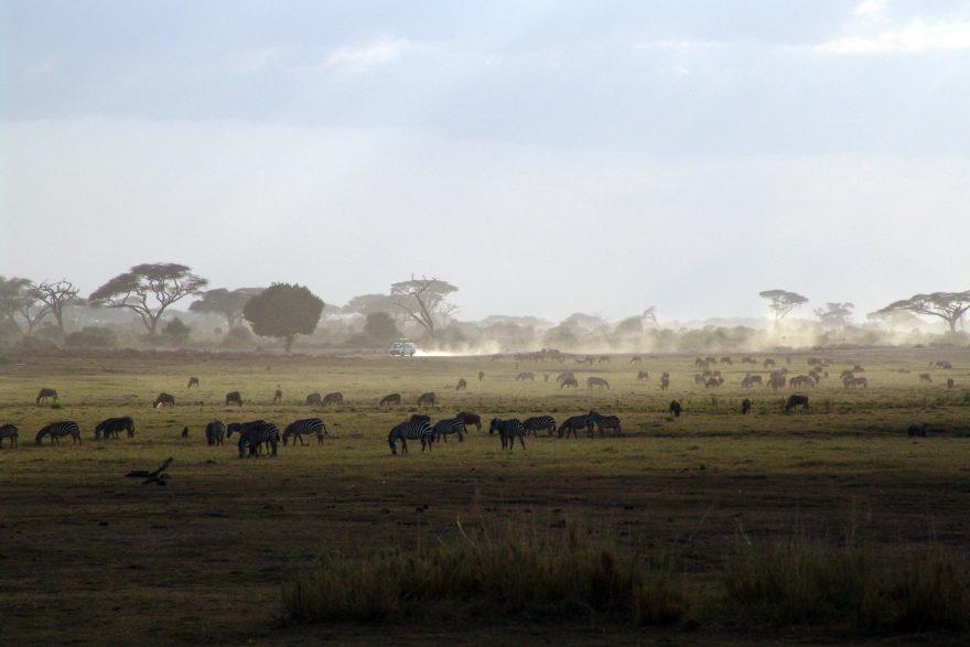Kenia sigue siendo el destino líder en safaris para los turistas