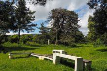 San Zadornil, una urbe formada por árboles que nos espera en Burgos