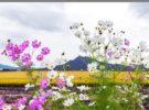 Descubre los mejores sitios para ver paisajes primaverales en Corea del Sur