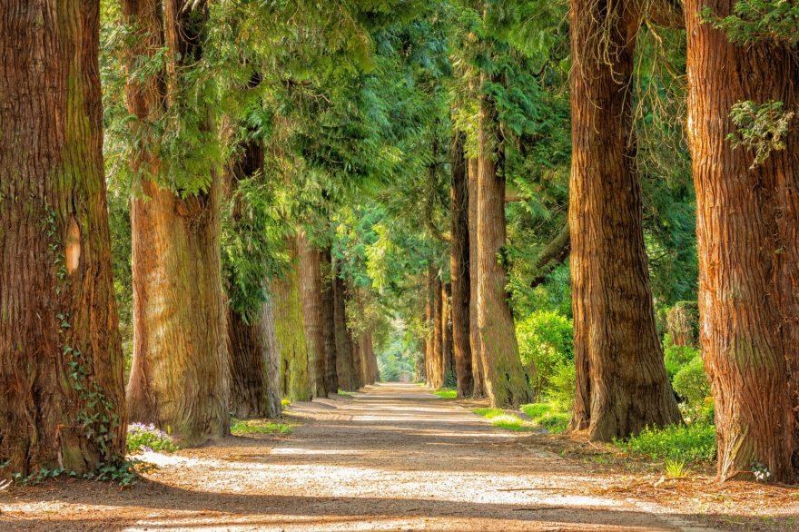 Bosque Paisaje Porconocer