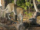 Conoce lugares únicos de Botswana, paraíso de África