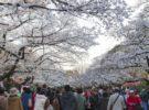 Los parques de cerezos en flor de Tokio en primavera