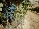 Las tres rutas del vino más visitadas en España