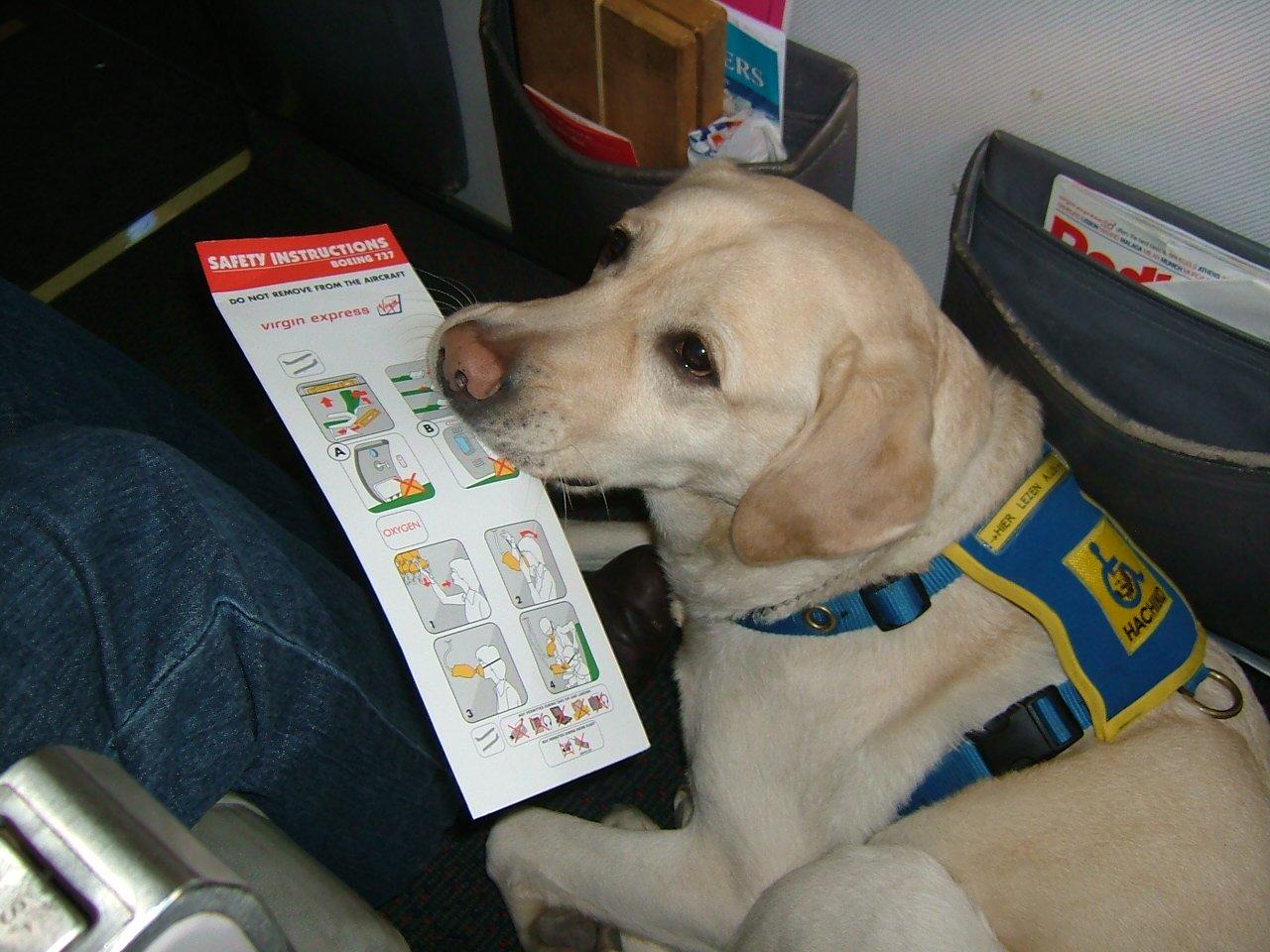 Verano Mascota Avion