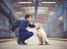 Verano con mascotas: lo que debes saber antes de reservar tus vacaciones