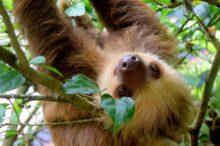 Costa Rica, líder en turismo responsable