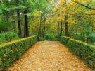 Espacios naturales para disfrutar en la Comunidad de Madrid