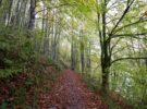Bosques españoles para escaparse en verano