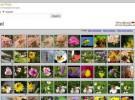 FlickrBabel, haciendo búsquedas multilingües en Flickr