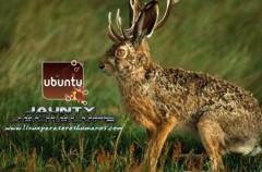 Liberada la nueva versión de Ubuntu 9.04: Jaunty Jackalope