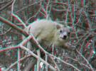 Crea tus propias imágenes en 3D con Free 3D Photo Maker