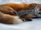 Firefox 10 Beta 2 reporta más de 11.000 errores en solo una semana