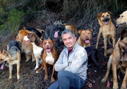 César Millán trabajará con perros abandonados en El líder de la manada