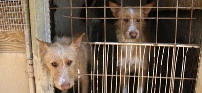 El tráfico ilegal de perros, esta noche en En el punto de mira en Cuatro