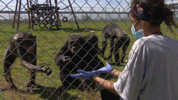 Crónicas emite el reportaje Compasión animal el lunes