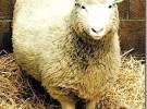 No pego ojo ni contando ovejitas