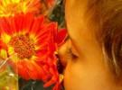 Esencias florales para ayudar a nuestros niños