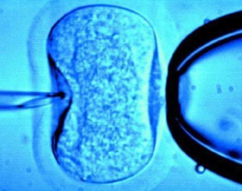 Nacen más niños por reproducción asistida