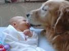Los bebés entienden los ladridos de los perros