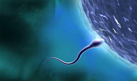 cientificos britanicos crean esperma en el laboratorio