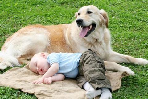 Las mascotas pueden prevenir y causar alergias