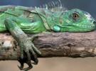 Los reptiles, unas mascotas distintas