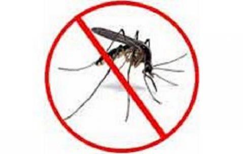 Los repelentes de insectos pueden causar daños en el feto varón