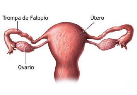 Nace el primer bebé concebido naturalmente tras un trasplante de ovario