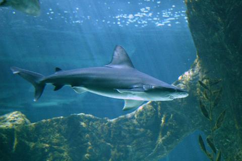 Canción: Tiburón, tiburón