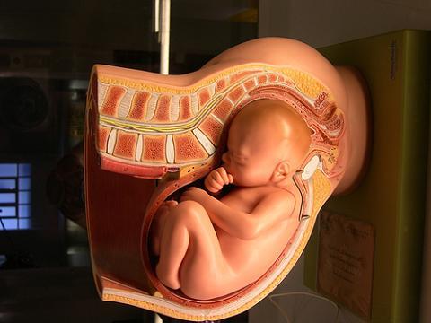 Lo que nos sucede en el útero puede afectar a la vida adulta