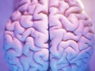 Nuevos descubrimientos sobre el desarrollo cerebral de los bebés