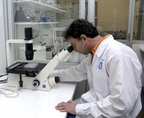 Nuevos estudios del cordón umbilical