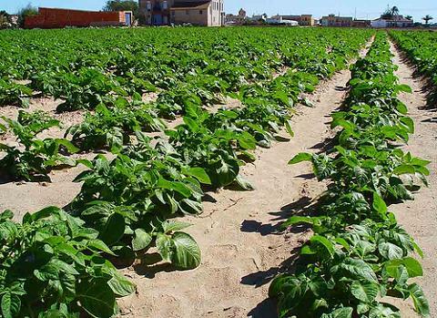 Pesticidas de uso agrícola afectan al feto