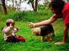 Si tu hijo quiere dormir con el perro