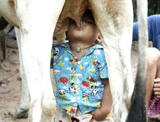 Los peligros de tomar leche sin pasteurizar