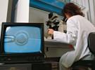La fecundación in vitro ahora más barata