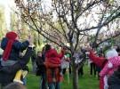 Los niños de Ávila ya tienen su árbol de chupetes