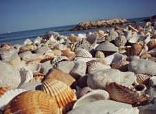 Manualidades conchas y caracolas