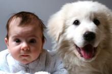 Los niños se sienten mejor con un animal de compañía cerca