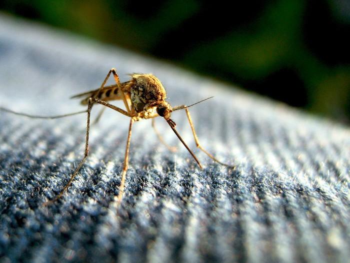 Una preocupante virus