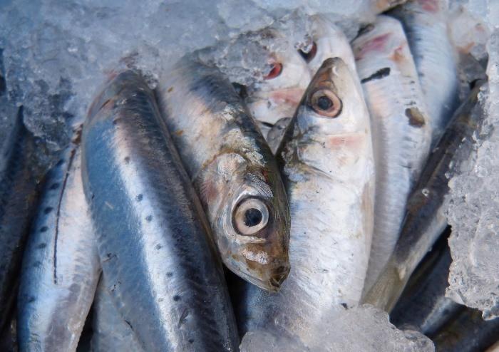 pescado y obesidad infantil
