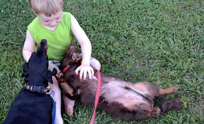Soy Padre: Los animales ayudan a curar dolores