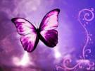 La historia de las mariposas moradas en las cunas de los hospitales