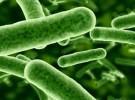 La flora bacteriana del útero, fundamental para el embarazo